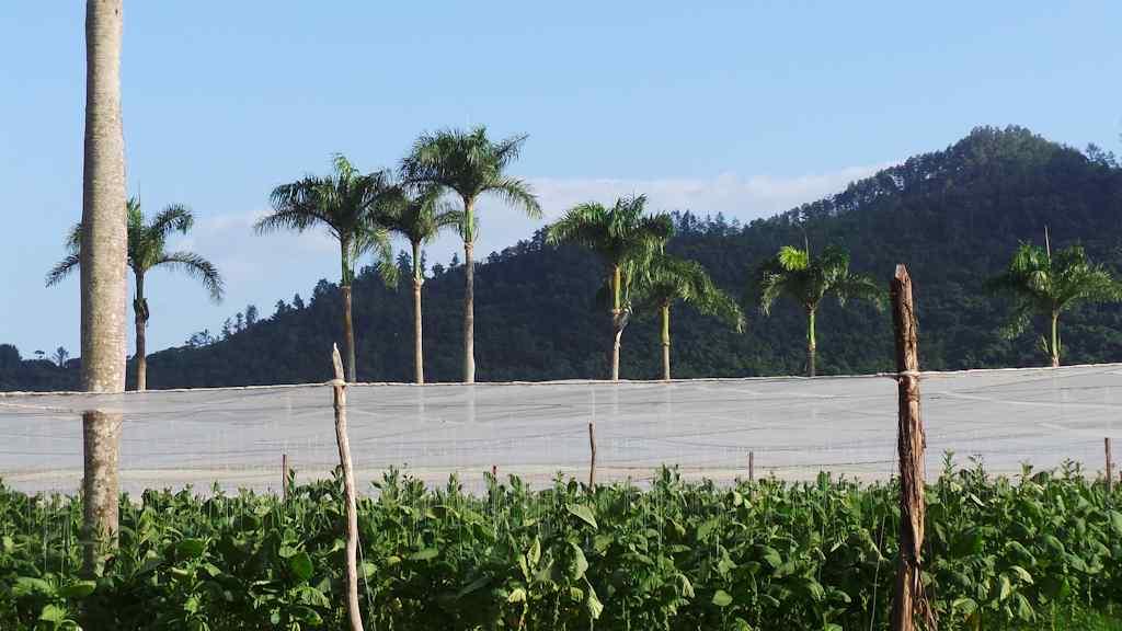 8 royal palms chateau de la fuente